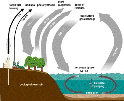 Why Carbon Cycle is Important || How it Works
