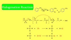 Halogenation Reaction|| What is the Mechanism of Halogenation?