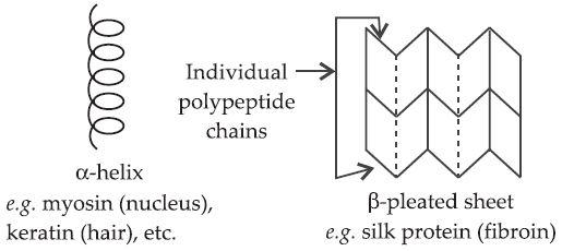 β-pleated sheet structure