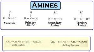 Amines: Nomenclature, Isomerism, Basic Characters