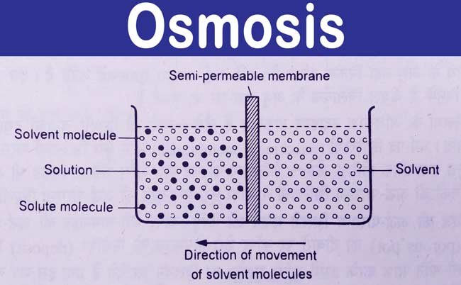What is Osmosis and Example? | Osmotic Pressure Definition